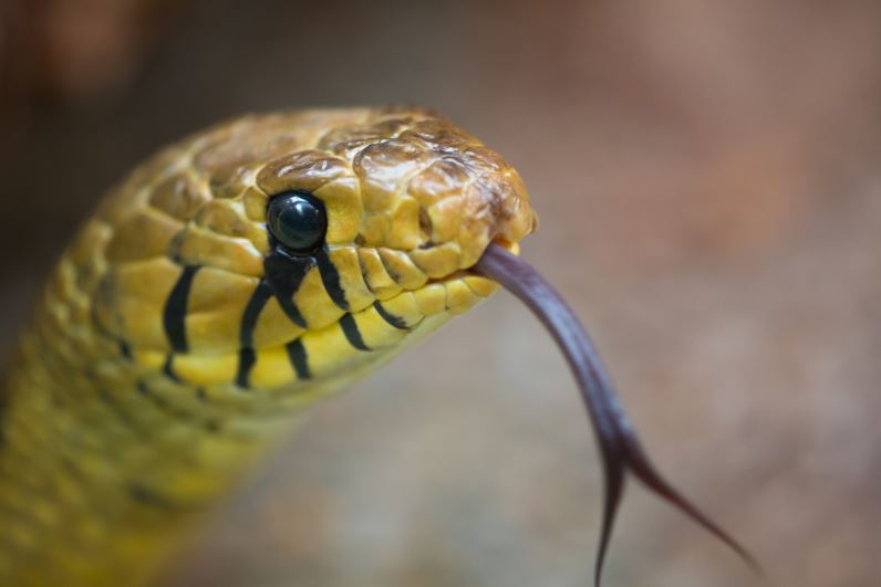 dream meaning of snakes