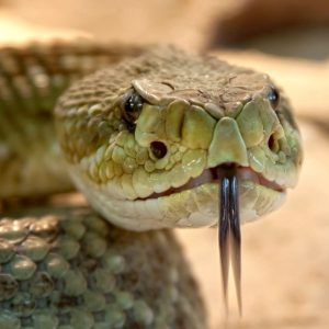 What You Should Know About Dreams Meaning Of Snakes